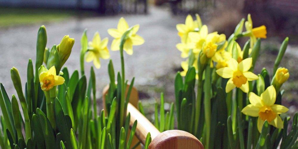 Spring 008